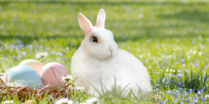 The Easter Bunny Delivers Pension Reforms